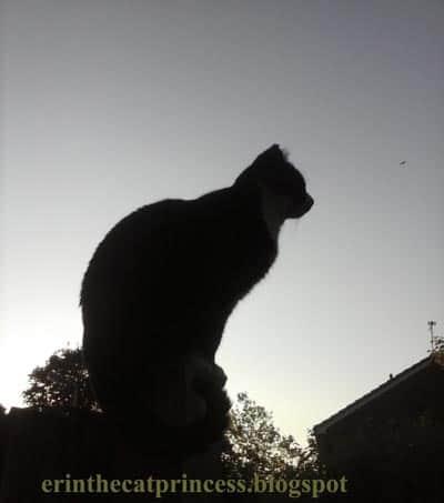 Erin The Cat Princess