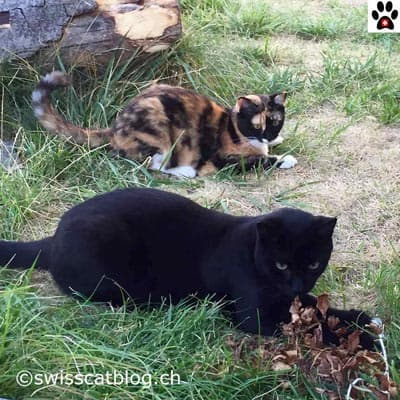 worldwide Pet Blogging Pixie and Zorro Swiss Cats