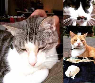 Dash Kitten Quartet