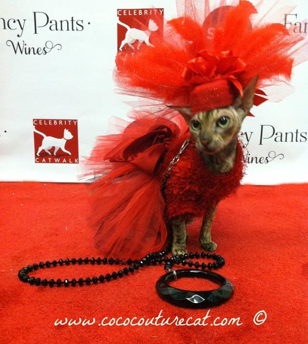 Coco the couture cat in a flaming red costume