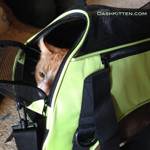 Ginger cat in carrier
