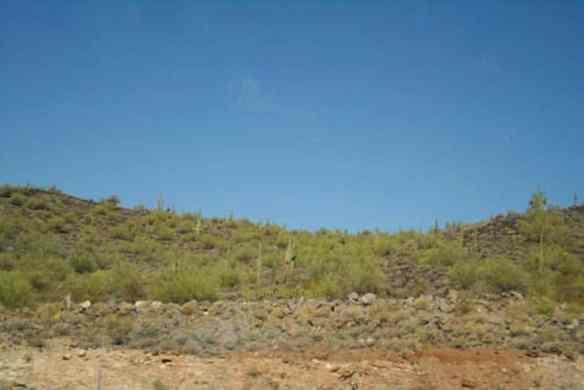 Saguaro Cactus image