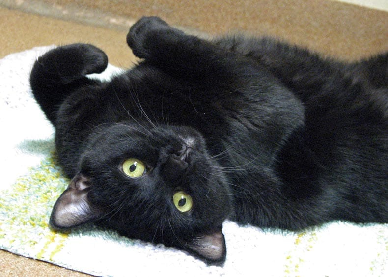 real black cats on black cat appreciation day