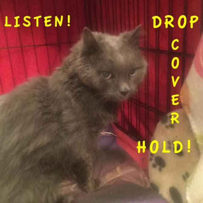 Drop Cover Hold Earthquake Drill with Dusty the Cat