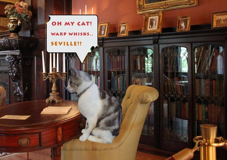 Prohibition Error Silver the Cat reading a book in the library