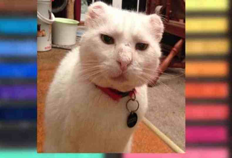 A white cat with a Rainbow background