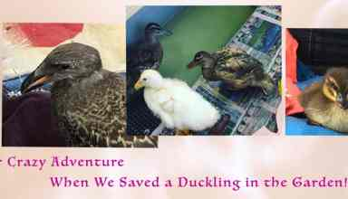 Rescue Ducks in a safe crate