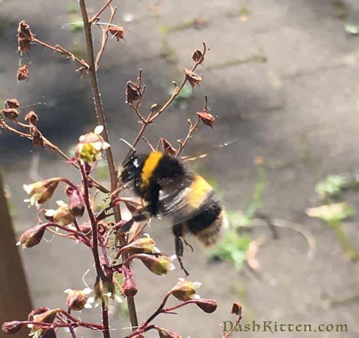 Busy Bee flies in our New Zealand summer