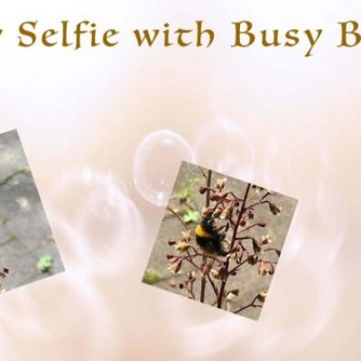 Busy Bees Sunday Selfie Picture