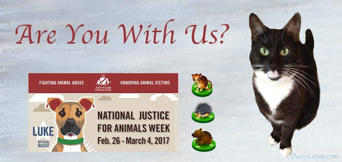 Find Out About Justice for Animals Week