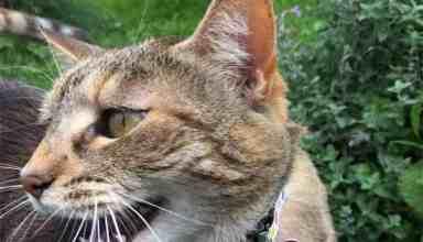 Sunday Selfie Dot Kitten