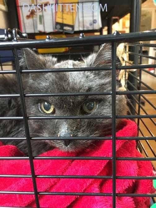Dusty Cat at the Vet