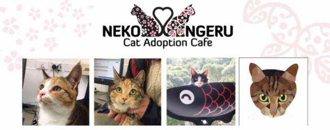 Cat Adoption Cafe