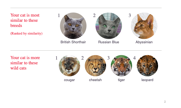 Genetics comparison chart for one cat