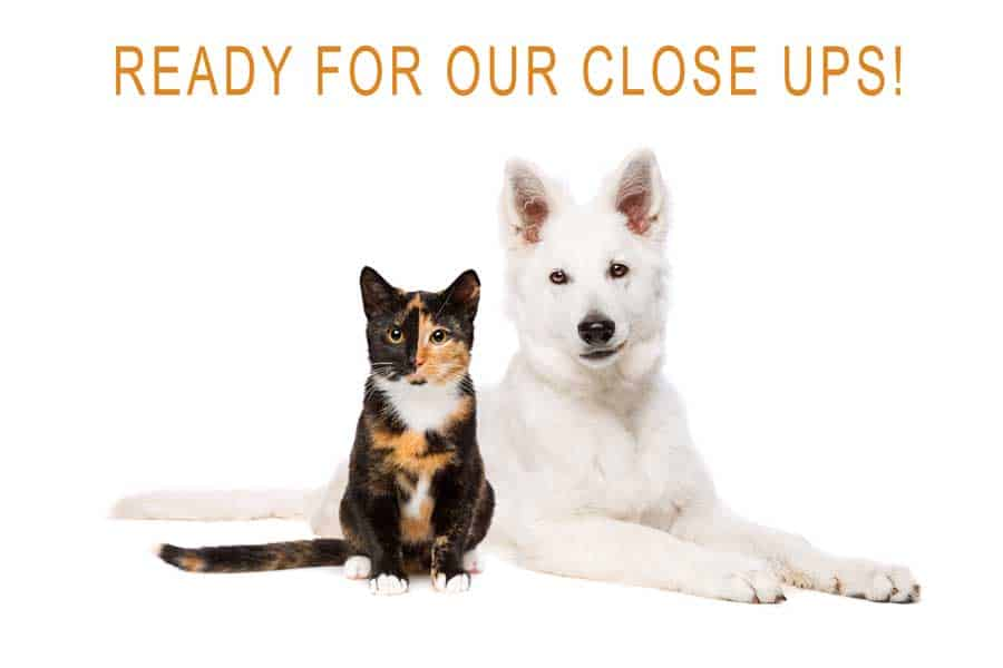 Smartphone movies cat and dog