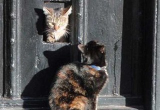History of the Cat Flap