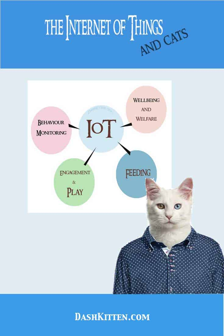 Internet of Things and Cats