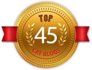 Dash Kitten Top Blog