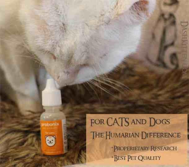 Probiotics for Cats Harvey 2