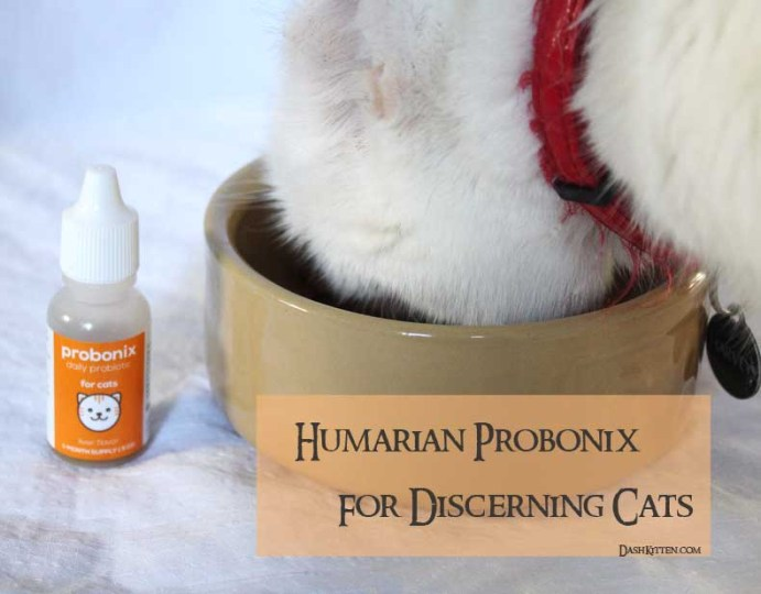 Probiotics for Cats with Harvey