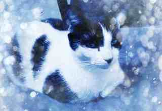 Chenzou Blue Snow Bokeh Effect