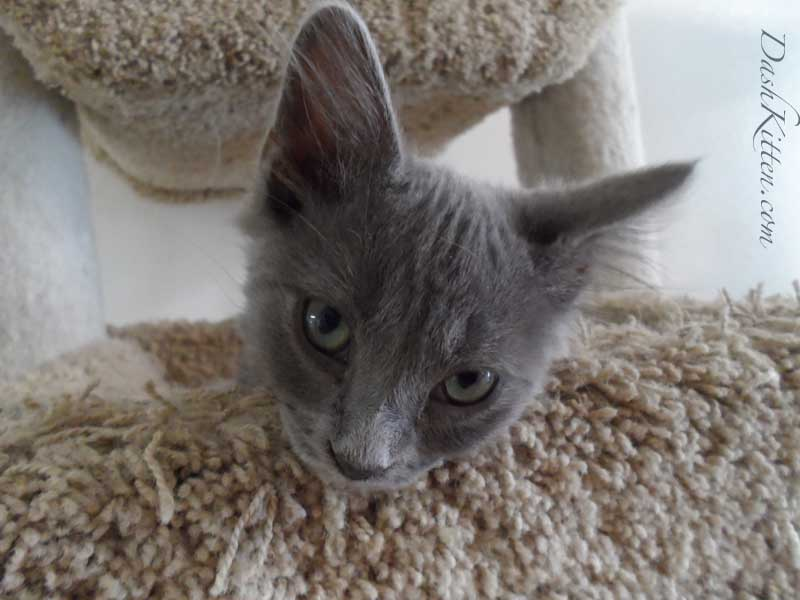 Kitty Corner Kitten