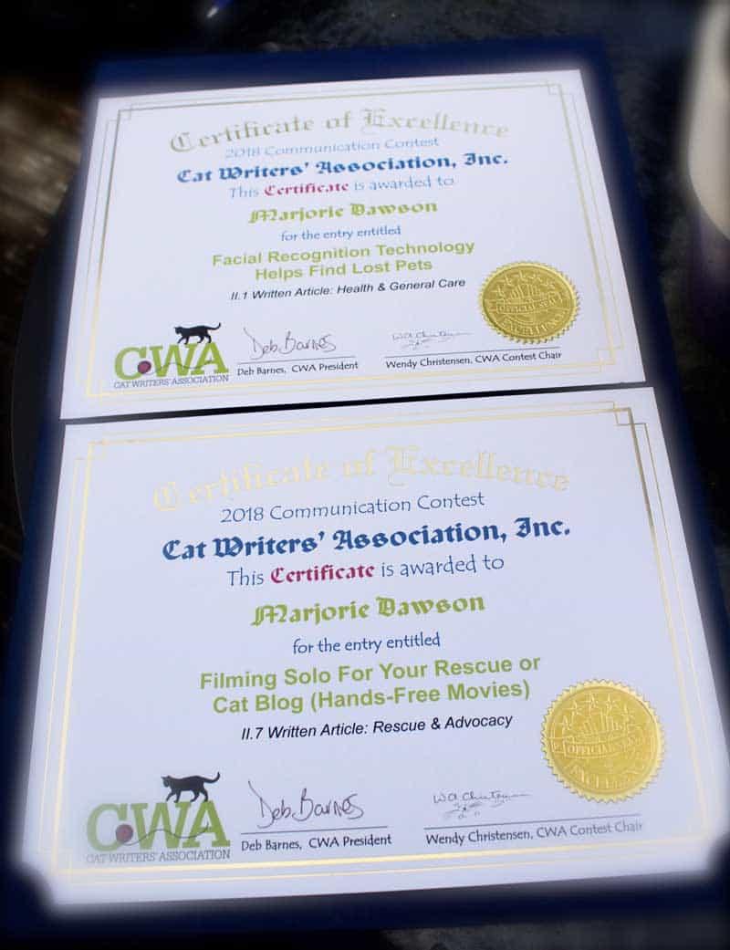 Certificate Winners Dash Kitten Blog