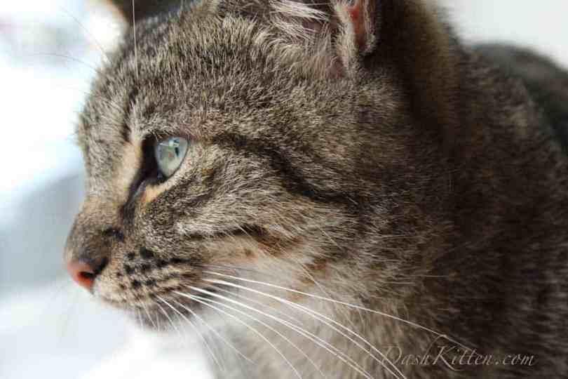 Beth Tabby Cat cat closeup photograph