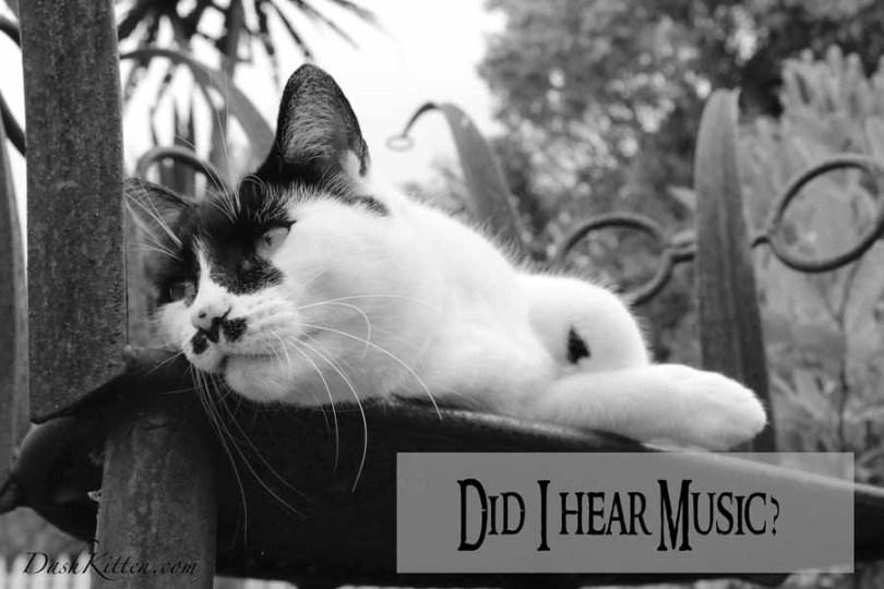 Do I hear Music A cat Listens
