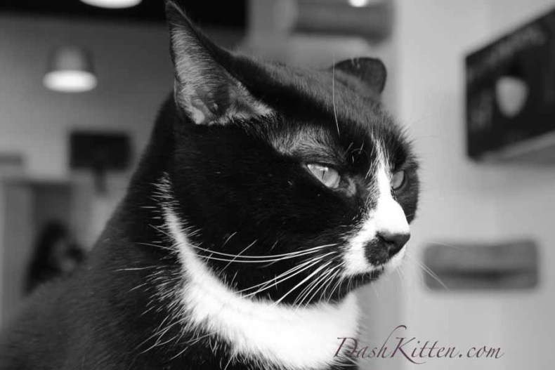 Which photos do you transform to Black and White 2
