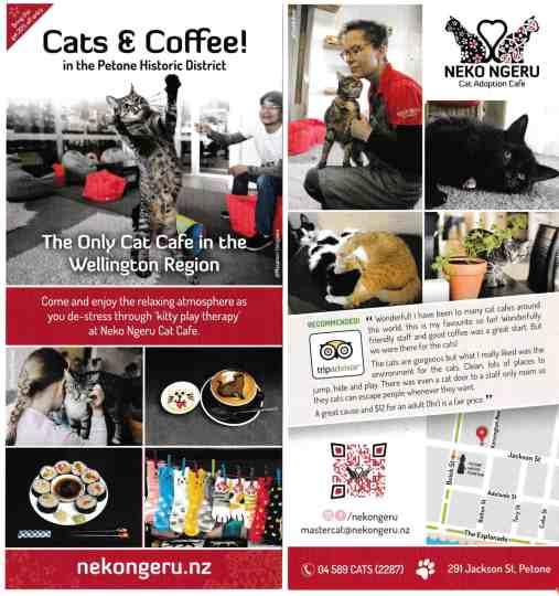 DashKitten image on the printed publicity for Neko Ngeru Cat Cafe