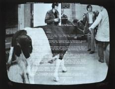 Wolf Vostell, TV-Ochsen 2, 1971 (Quelle: Edition Block)