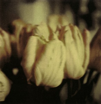 Cy Twombly, Tulips, 1985