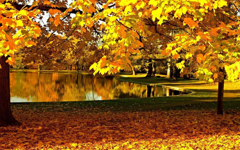 Fall Wallpaper Photos Microsoft Le Foglie Gialle In Autunno Hd Sfondo Del Desktop A