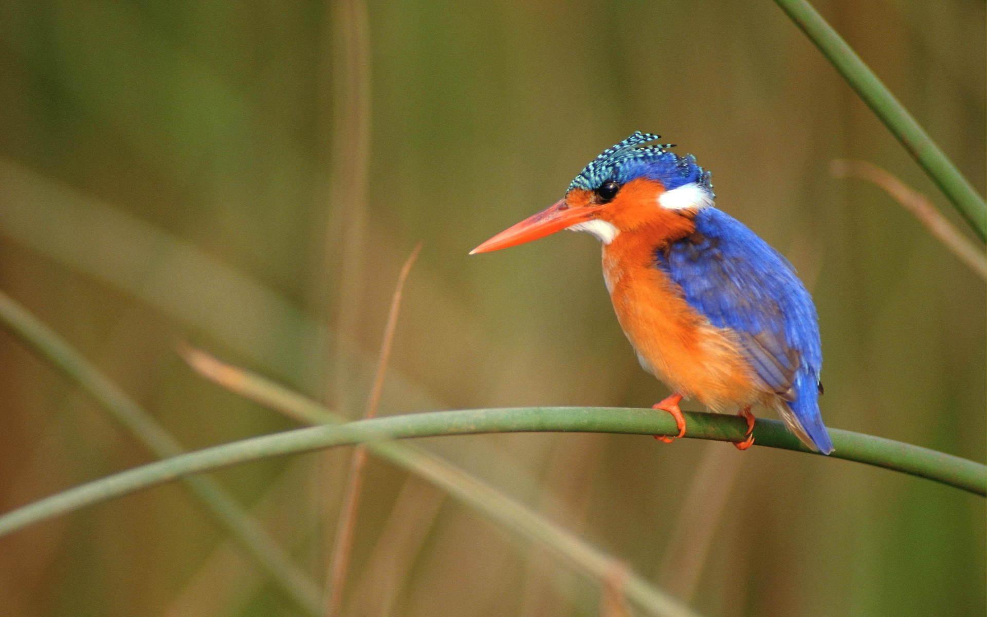 beau bleuorange oiseau HD papier peint de bureau cran