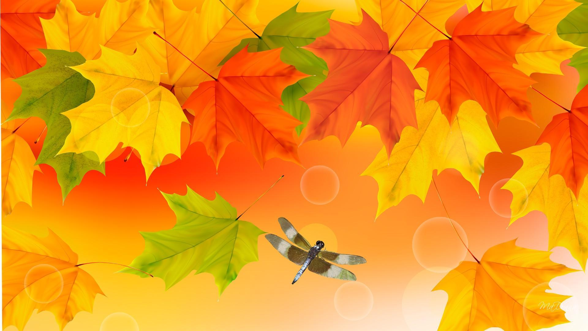 Free Disney Fall Wallpaper Brightness Of Fall Colors Hd Desktop Wallpaper