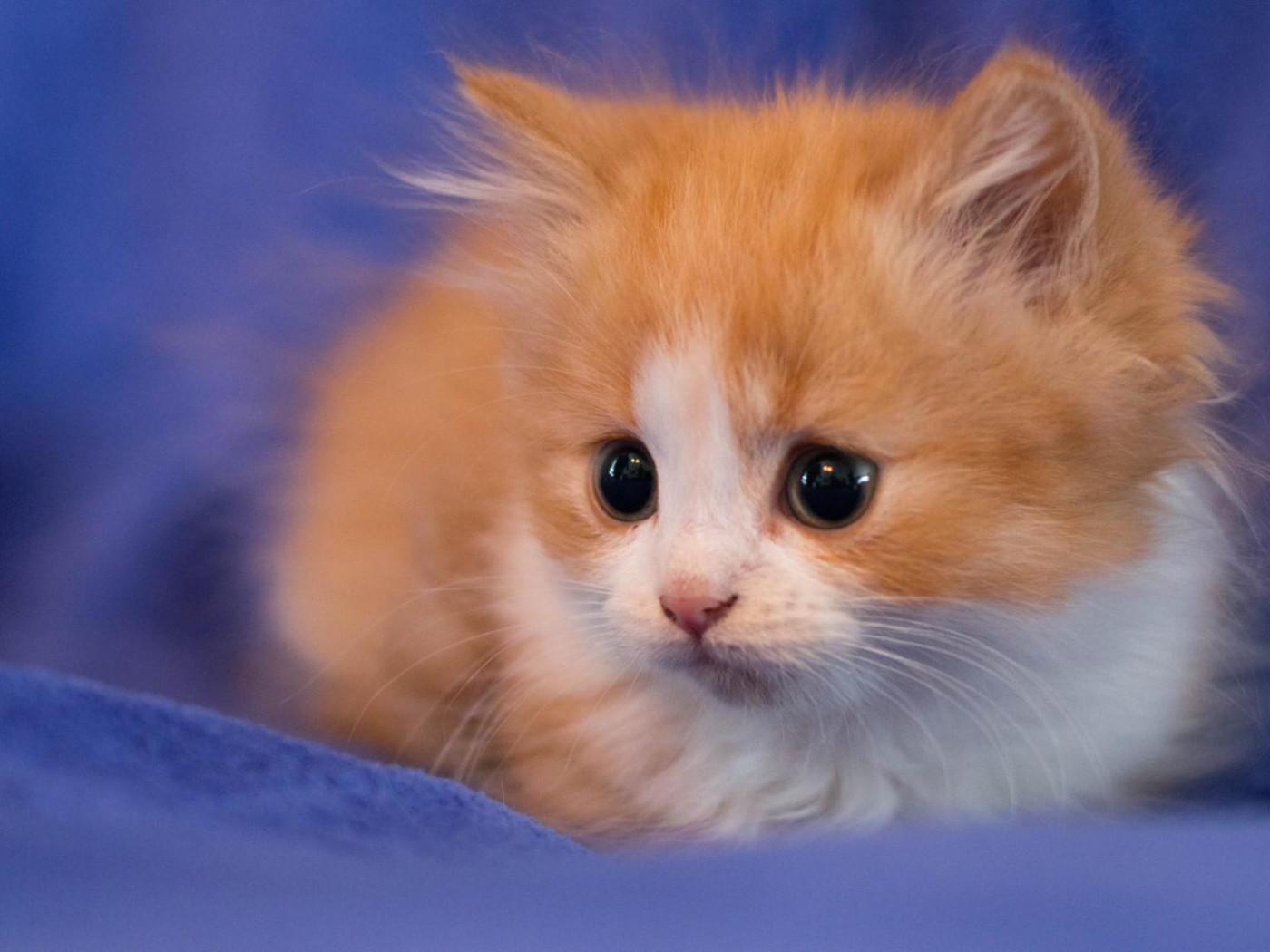 Free Cute Kitten Wallpapers 와이드 스크린 벽지 새끼 고양이 열심히 배경 사진 귀여운 동물의 Hd를보고 높은 정의 전체 화면