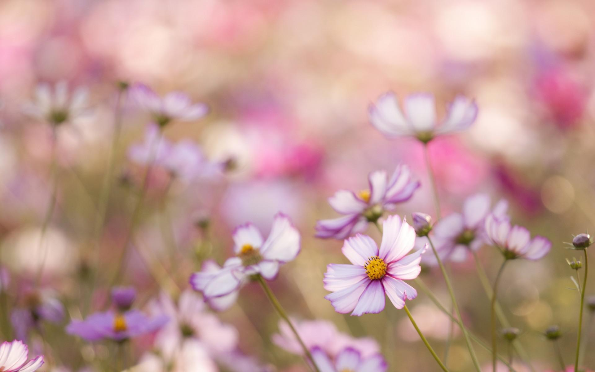 Blurred Flower Garden Background