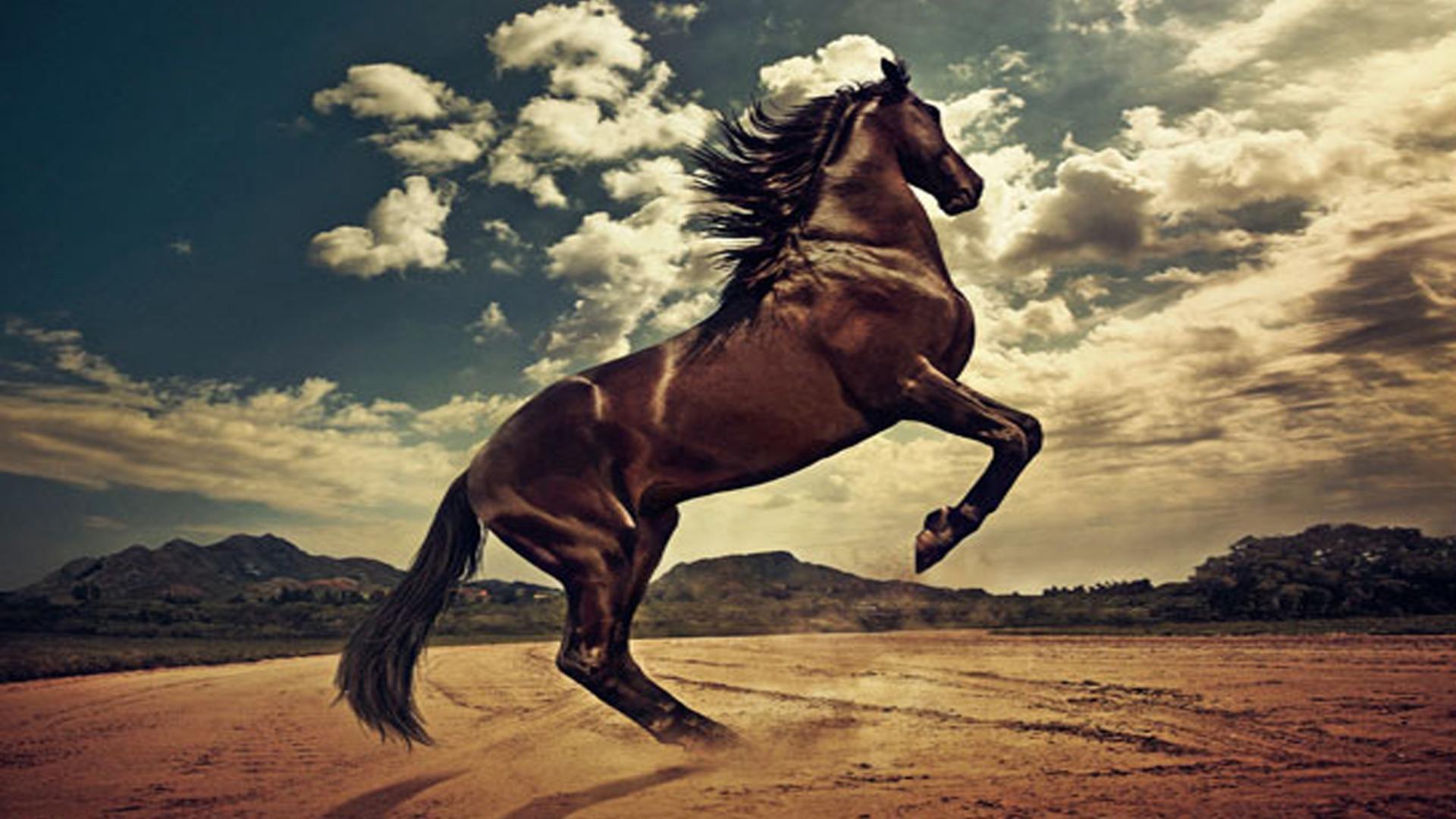 Wild Tiger Hd Wallpaper Steigende Pferd Hd Desktop Hintergrund Widescreen High