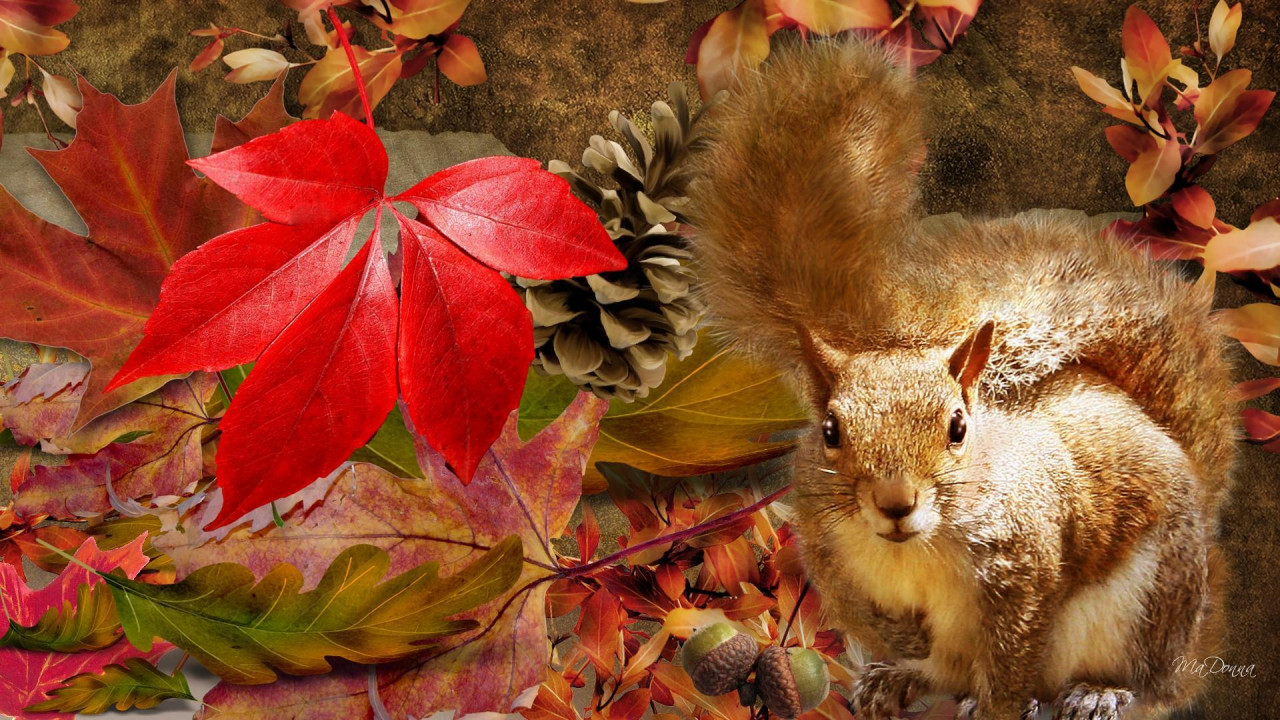 Fall Leaves Fox Wallpaper Squirrel Autumn Hd Desktop Wallpaper Widescreen High