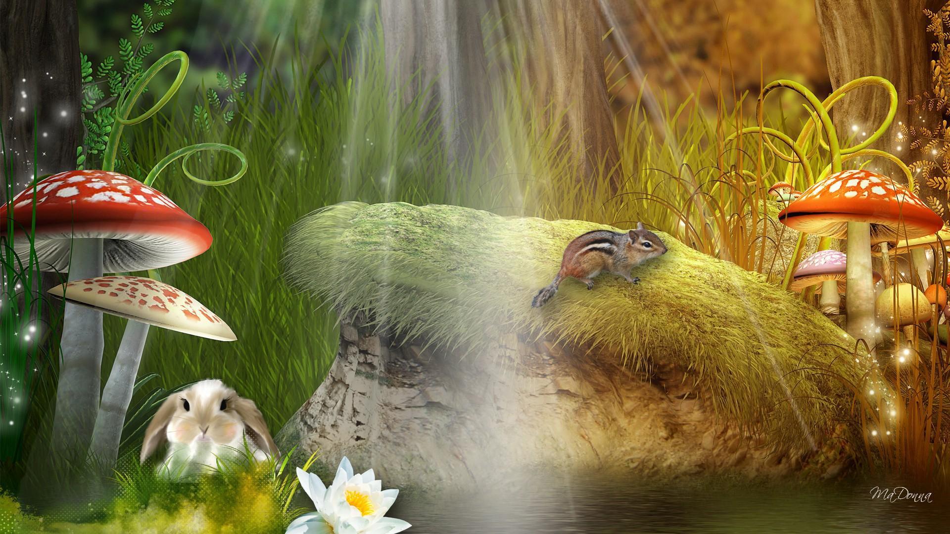 Fall Chipmunk Hd Wallpapers Summer To Fall In Fantasy Forest Hd Desktop Wallpaper
