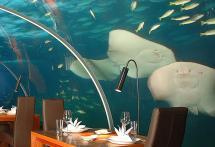 Underwater Dining Room Conrad Rangali Maldives Hd