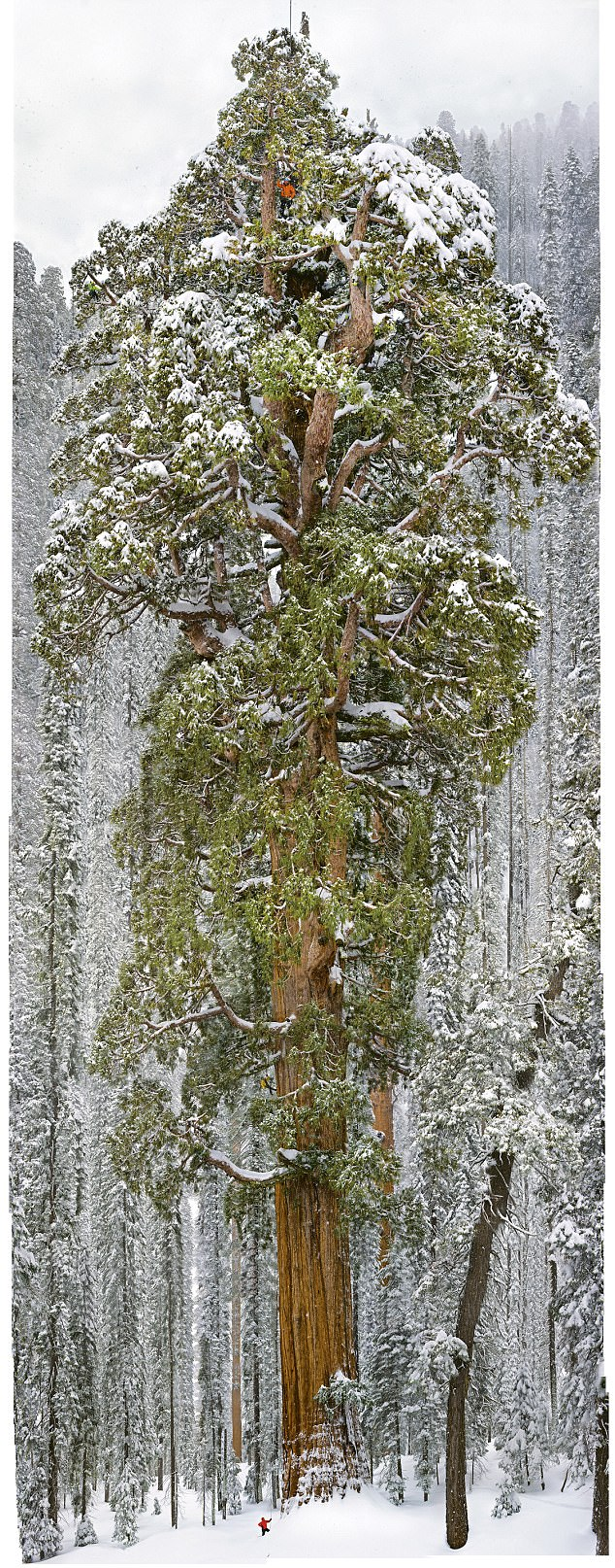 oldest tree in one photo