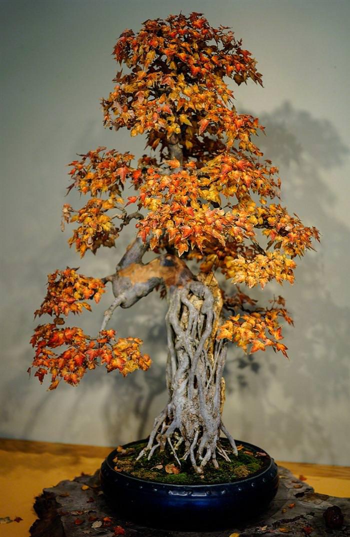 Wisteria Falls Wallpaper Bei 223 En Gedanken 22 Beautiful Bonsai Trees That Redefine
