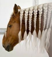 horses with beautiful hair