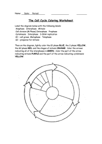 The Cell Cycle Coloring Worksheet (Page 2 of 2) in pdf