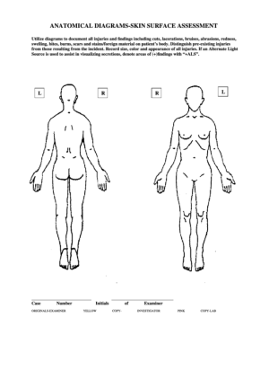 15 Body Charts free to download in PDF