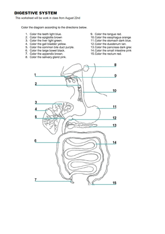 Digestive System Coloring Sheet printable pdf download