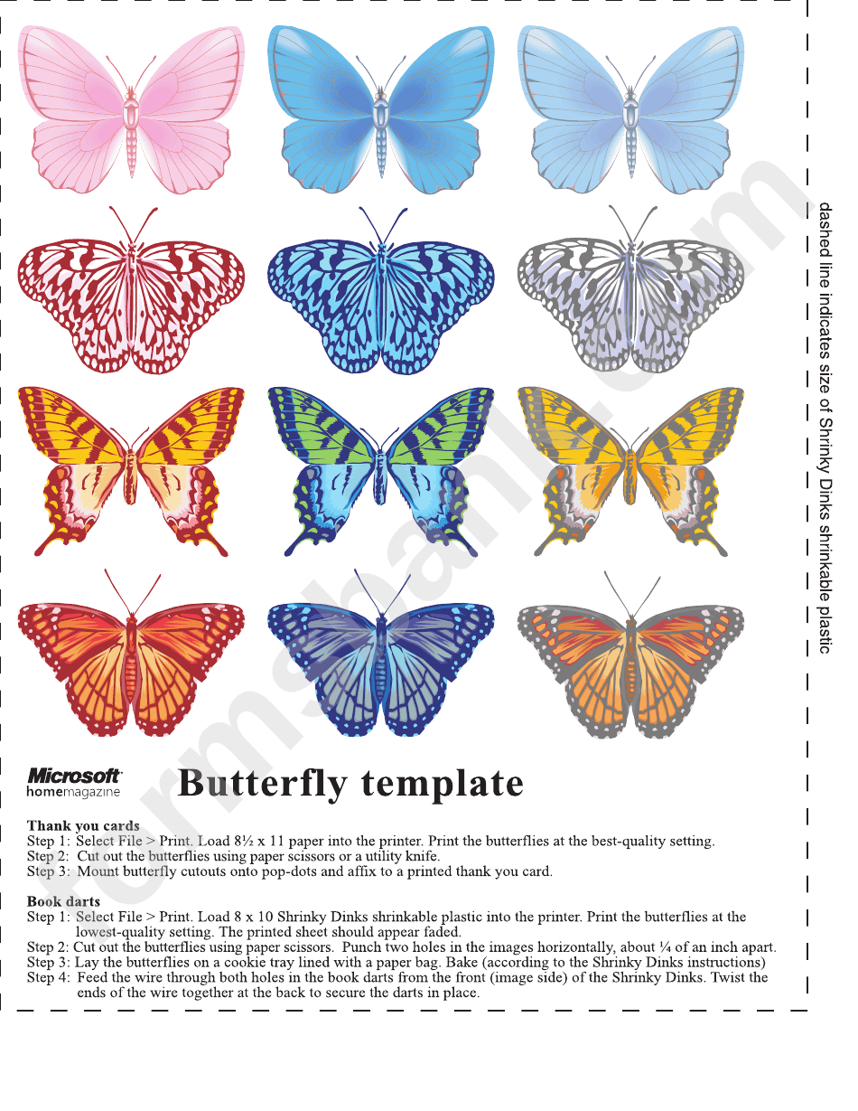 Multricolor Beautiful Butterfly Template