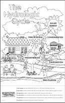 The Cell Cycle Coloring Worksheet printable pdf download